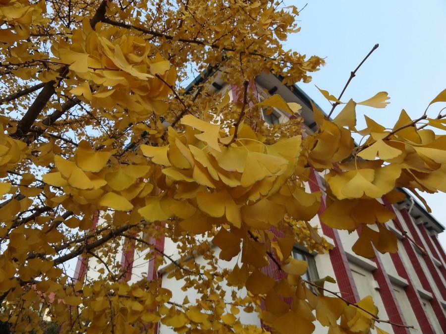 Листья россыпью