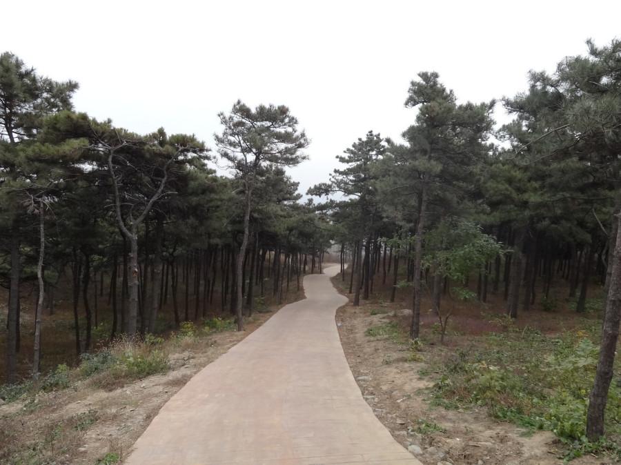 Счастливый лес