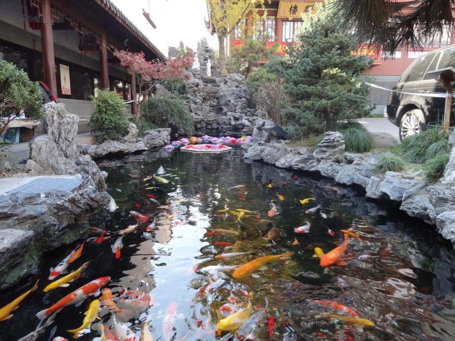 рыбы плавают в пруду