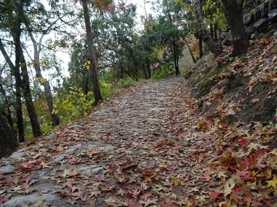 Дорожка с листьями