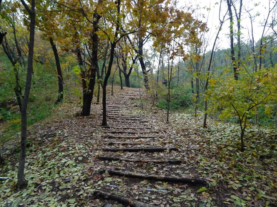 Деревяная лестница