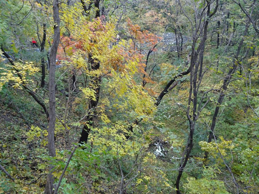 Листья влизи