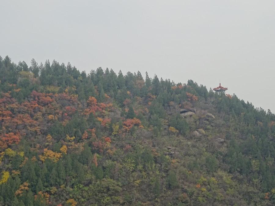 Пагода вдали и осенний лес