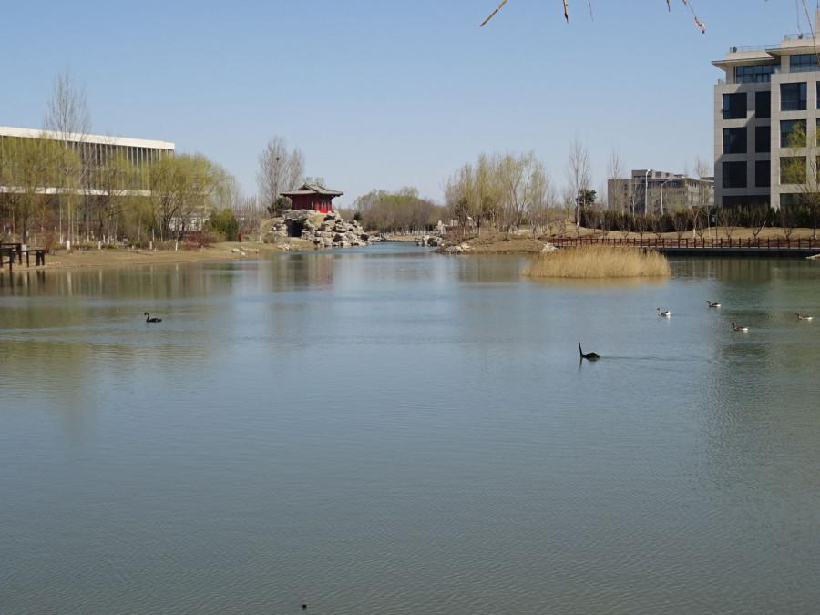 Озеро и птички