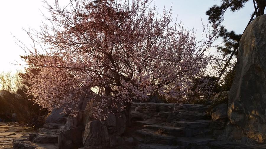 Лесной парк - цветущее дерево