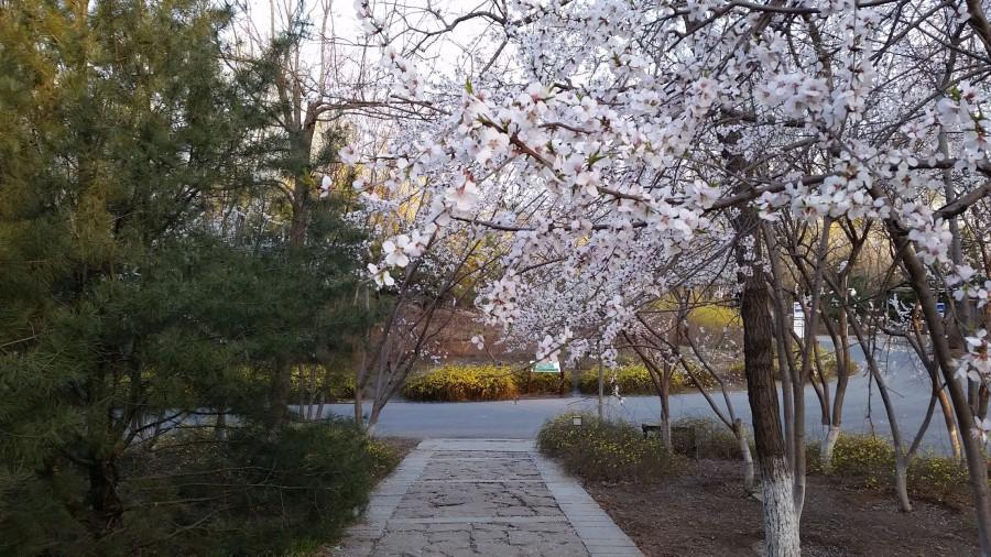 Лесной парк - дорожка сквозь цветы