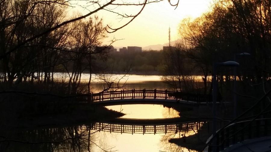 Лесной парк - мост на закате