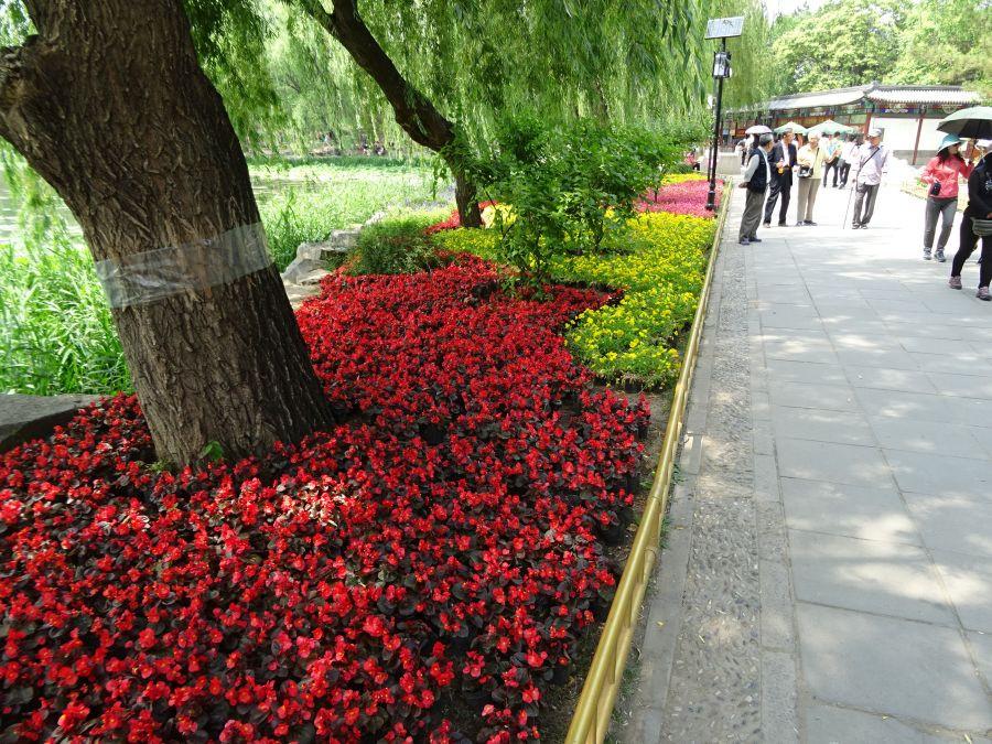 цветы в горшках общим планом