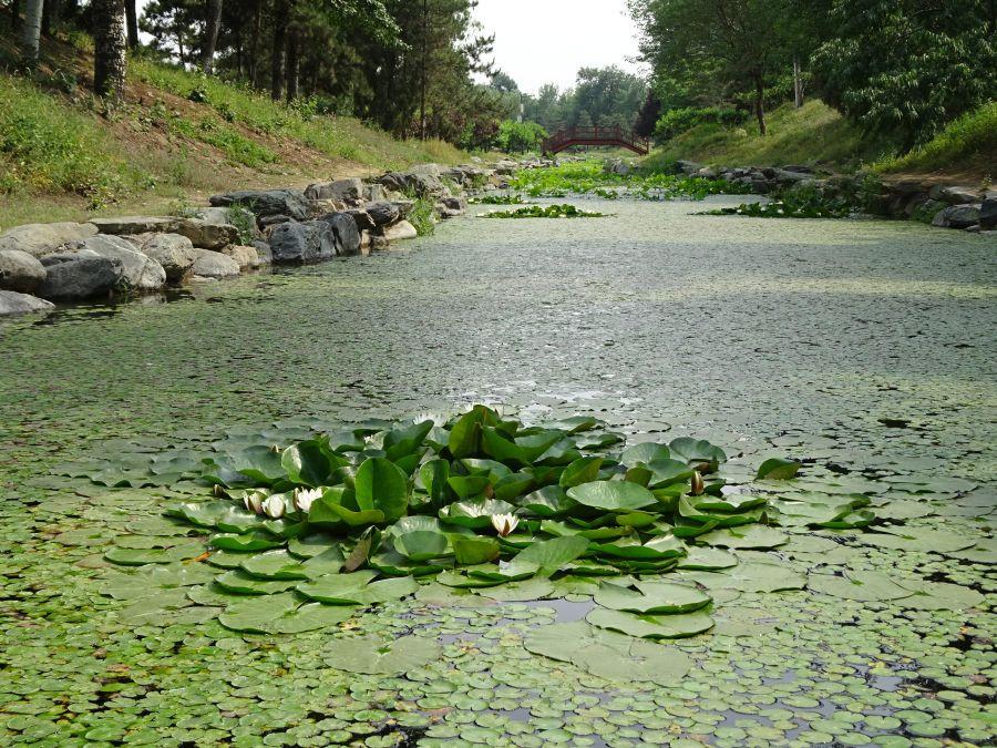 островок лилий