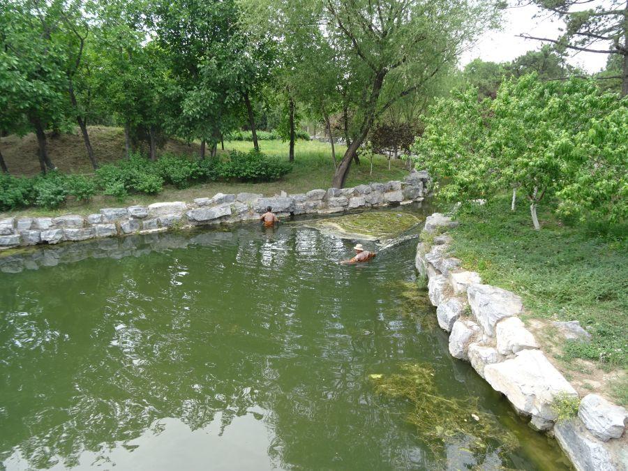 Сбор водорослей