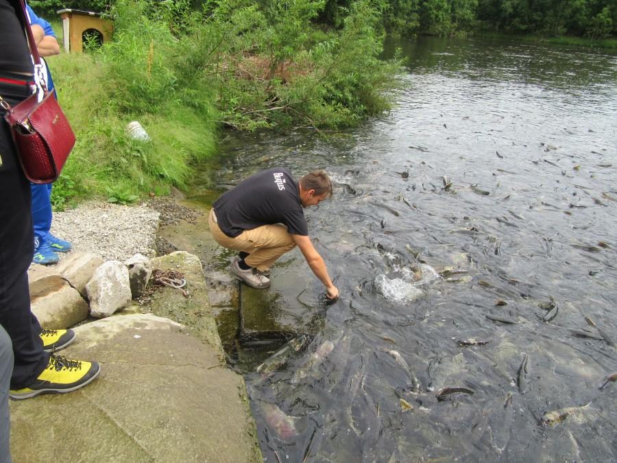 Серега ловит рыбу руками