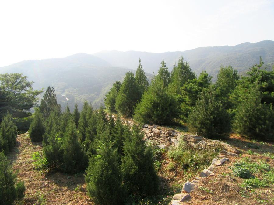 Молодые лесопосадки
