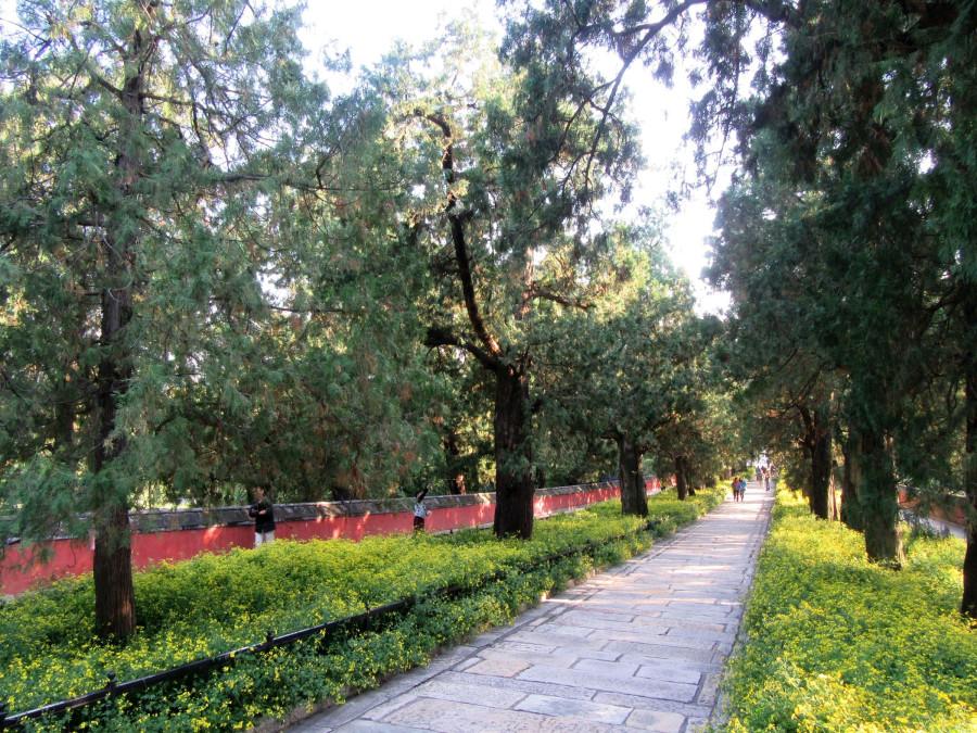Дорога в большой парк