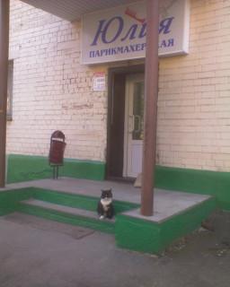 Кот Ячмень