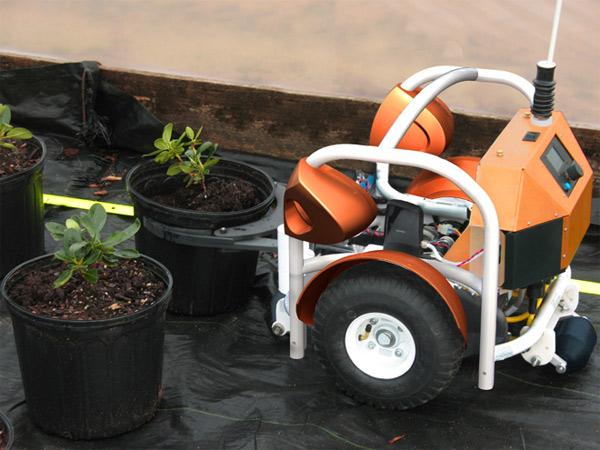 расстановка ведер с рассадой