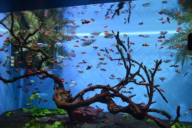 аквариумные рыбки2