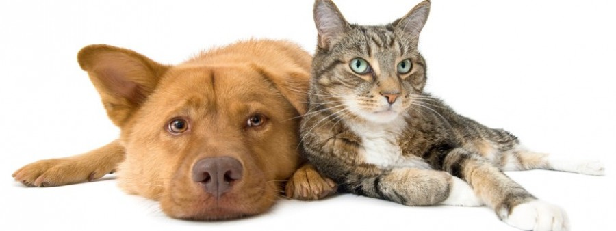 cat-and-dog-912x343