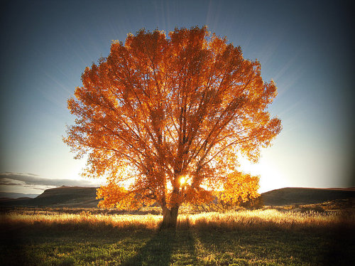 autumn-tree-beautiful-light-nature-photography-Favim.com-80987