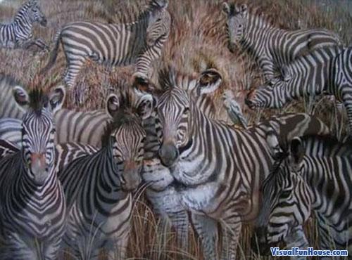 animal optical illusion pictures (33)