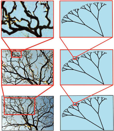 fractals in tree branches