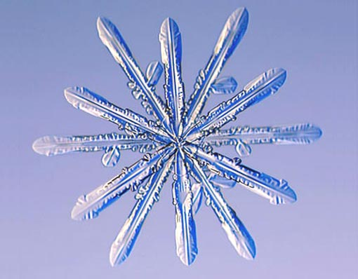 twelve-sided_snowflakes