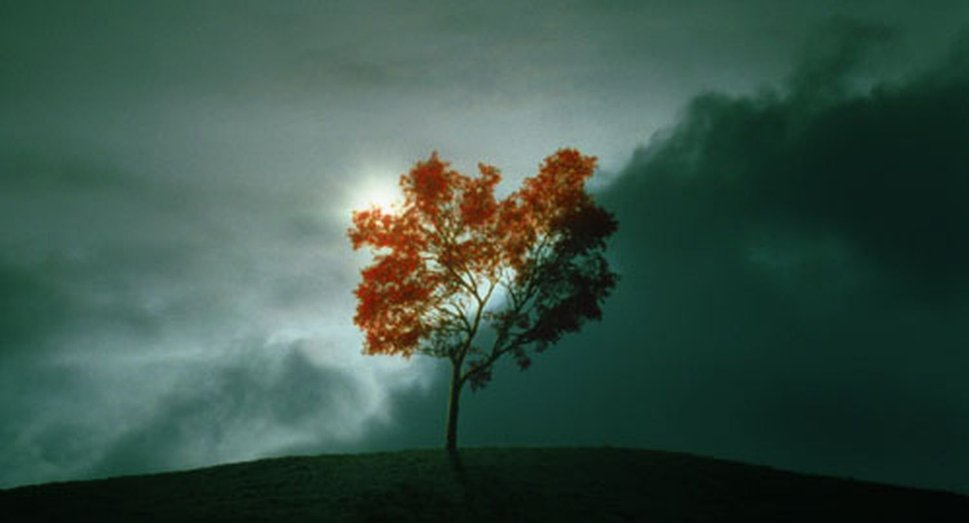476704__the-tree_p