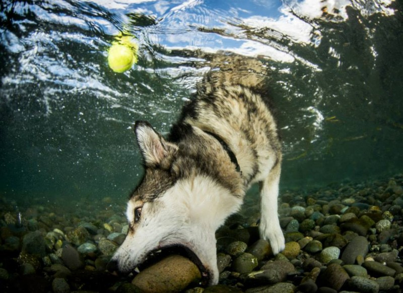 куче играе с топка - фал