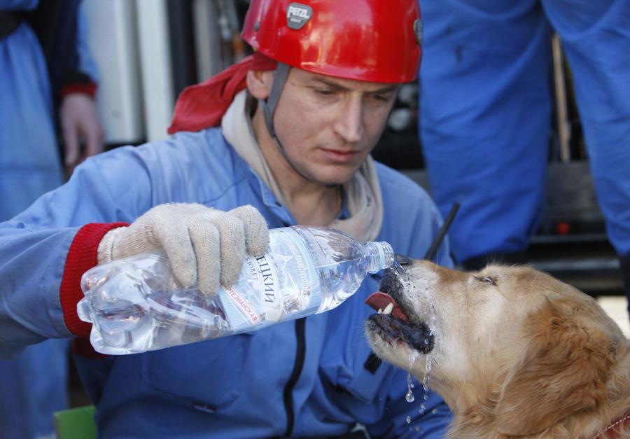 распространенный спасатели животных фото когда увидели