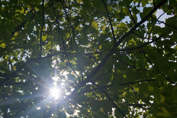 Листва и Солнце