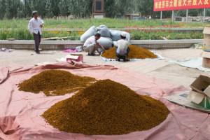 Продажа шафрана