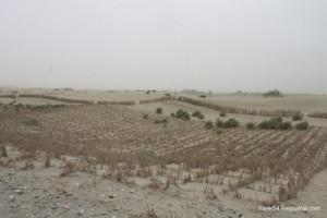 Тростниковые сетки пескозадержания