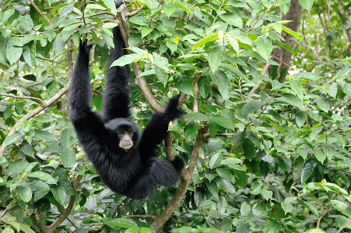 139-sing-zoo-web