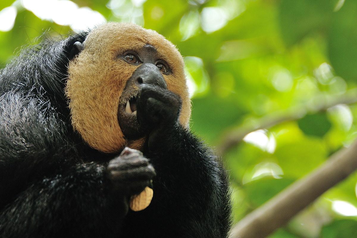 142-sing-zoo-web