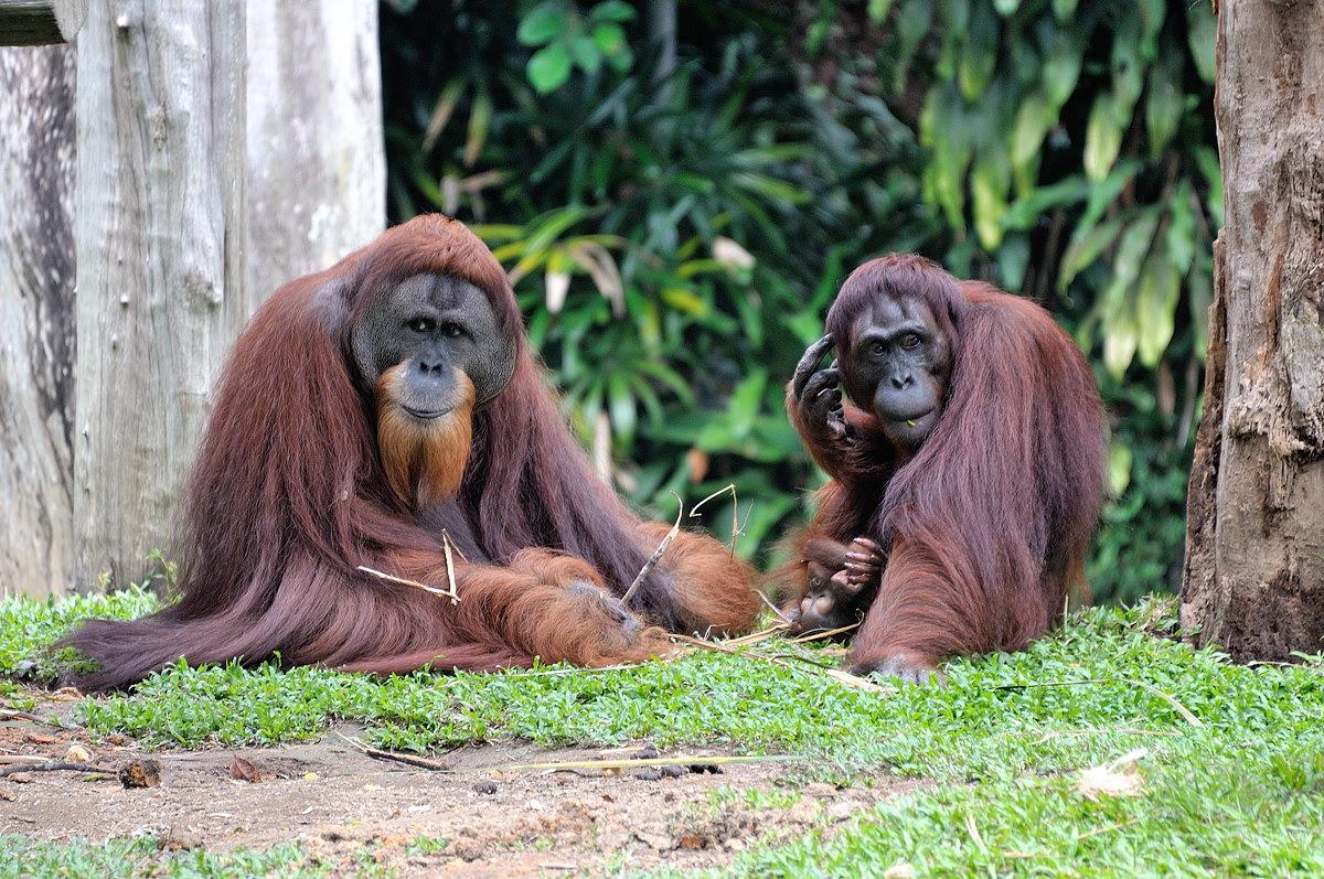 146-sing-zoo-web