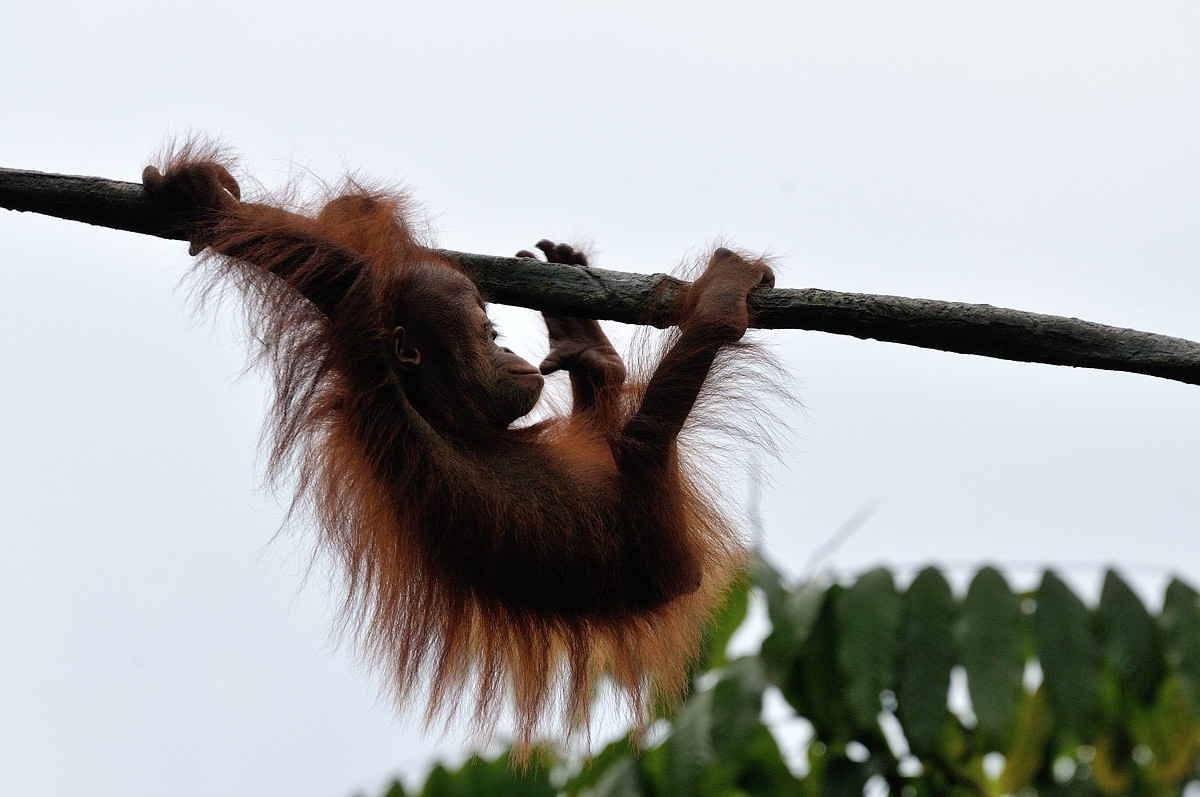 151-sing-zoo-web