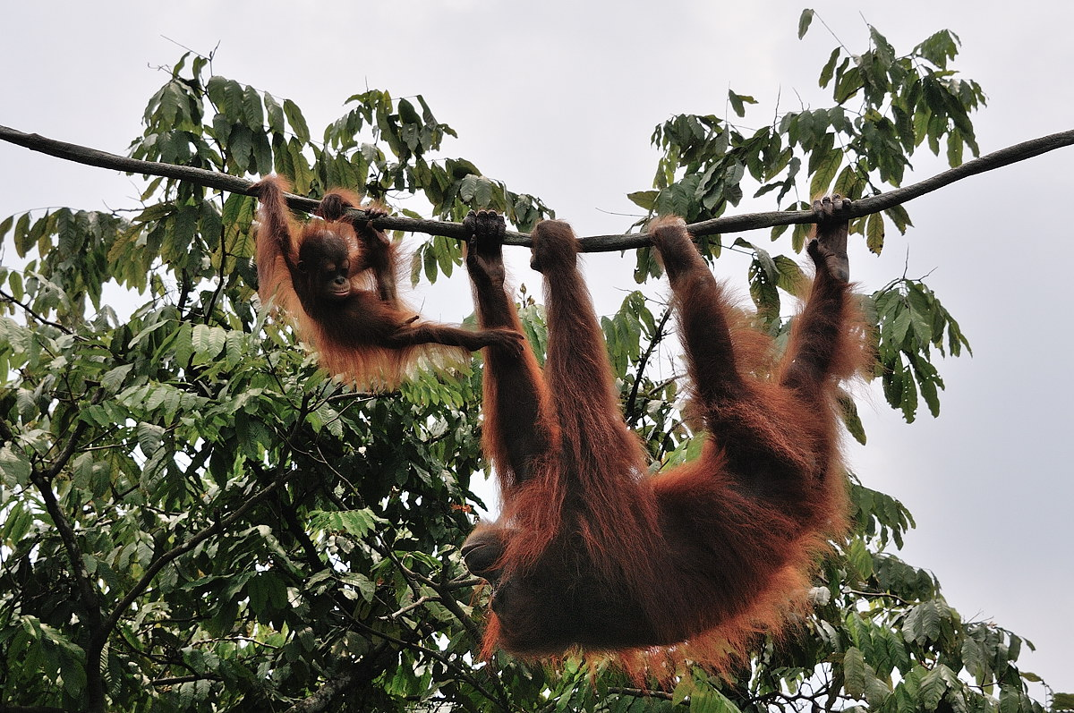 154-sing-zoo-web