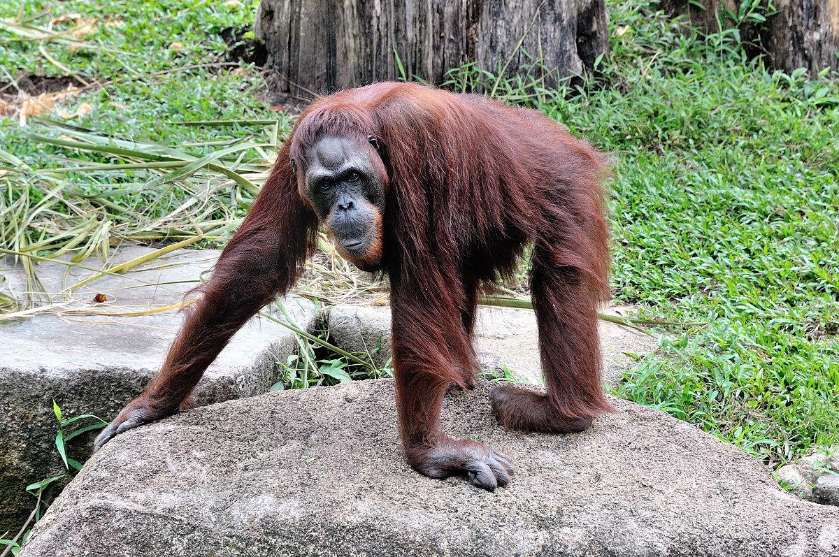 156-sing-zoo-web