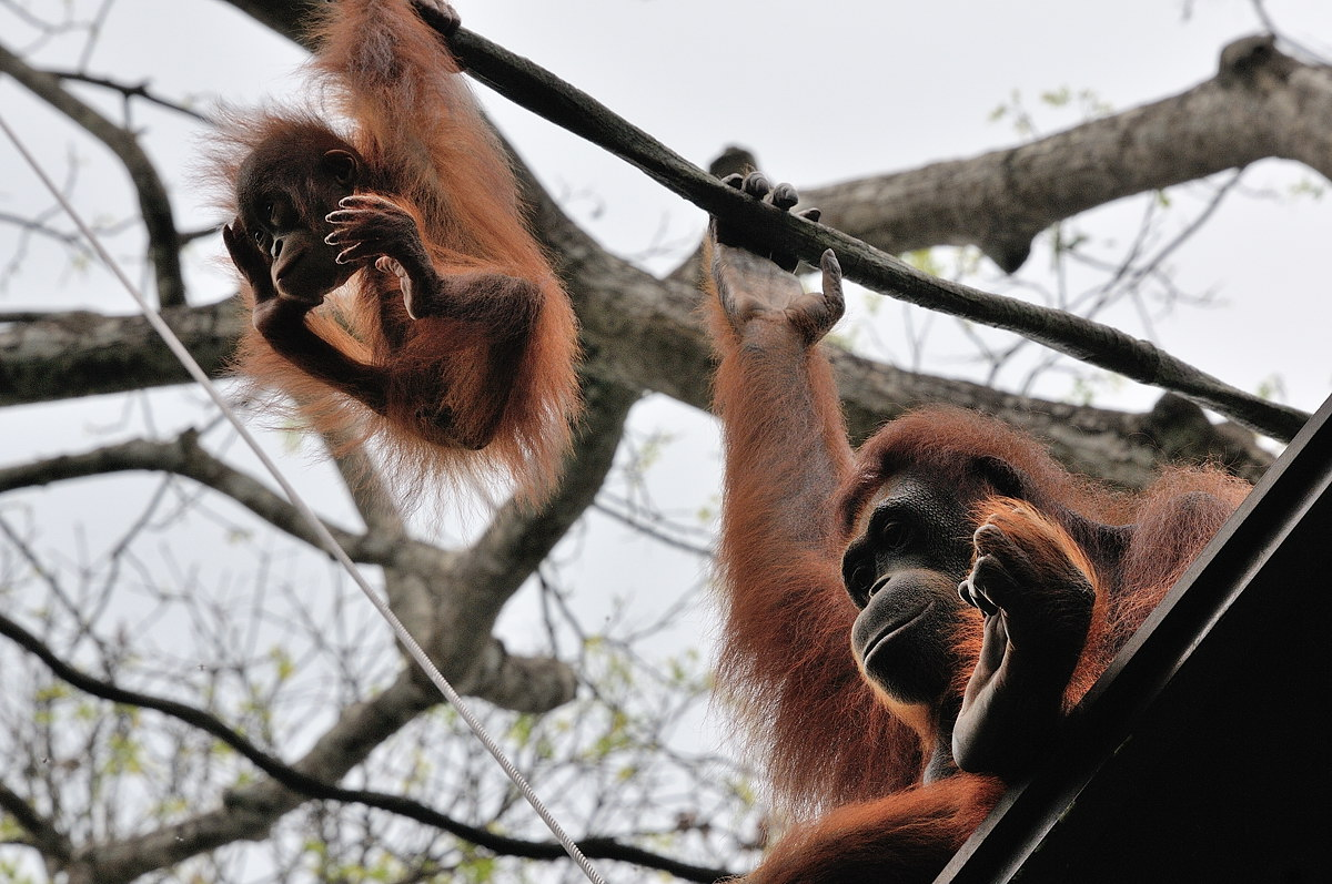 157-sing-zoo-web
