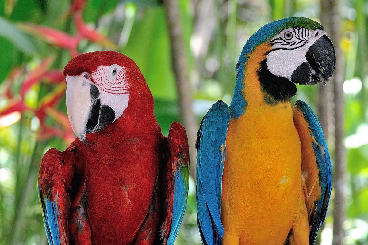 048-bali-birdpark-web