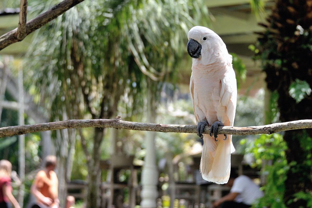 047-bali-ubud-birdpark-web