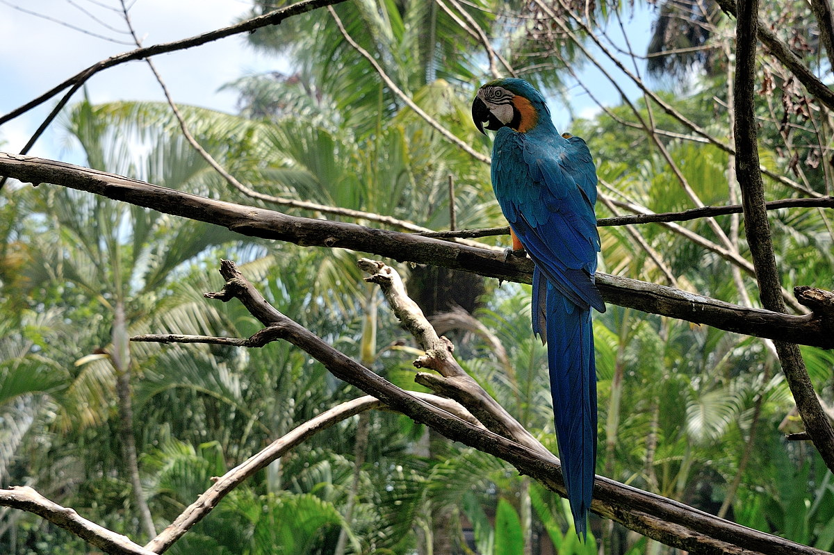 052-bali-birdpark-web