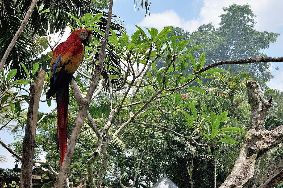 053-bali-birdpark-web