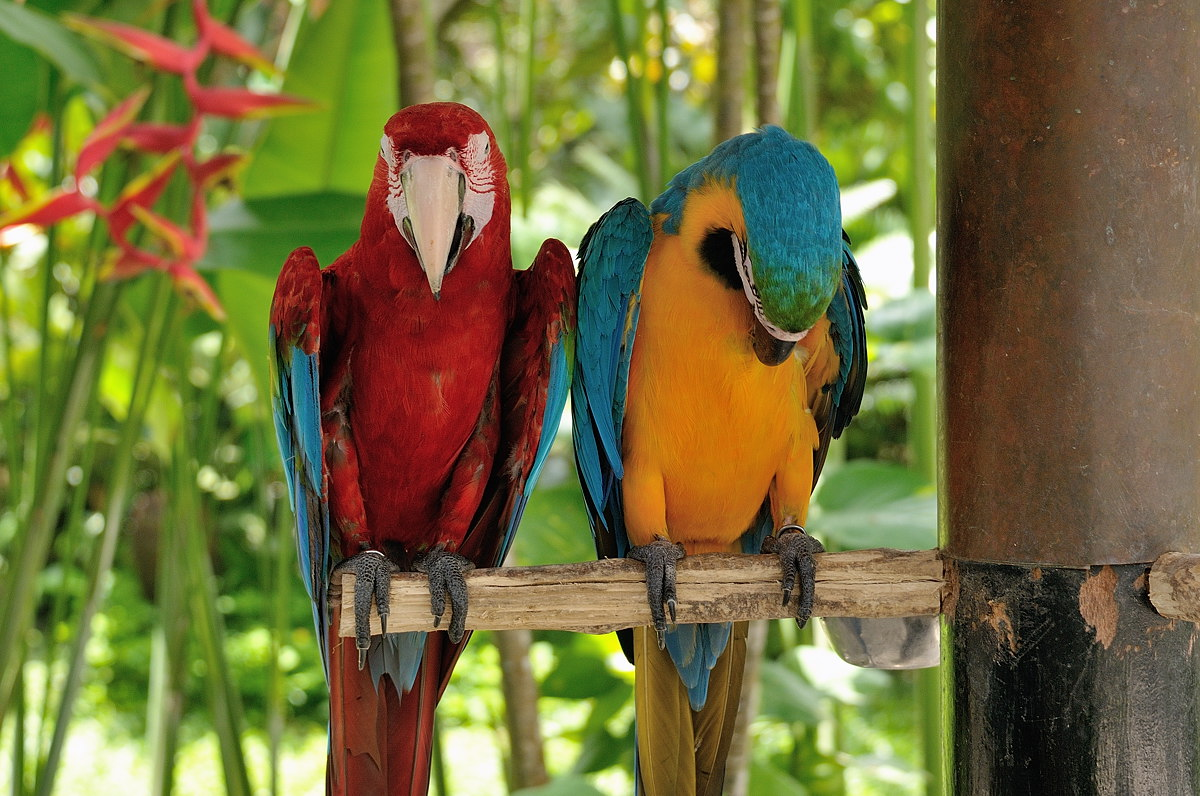 062-bali-birdpark-web
