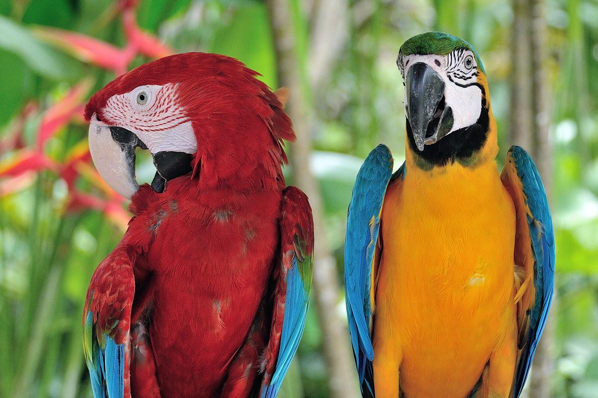 063-bali-birdpark-web