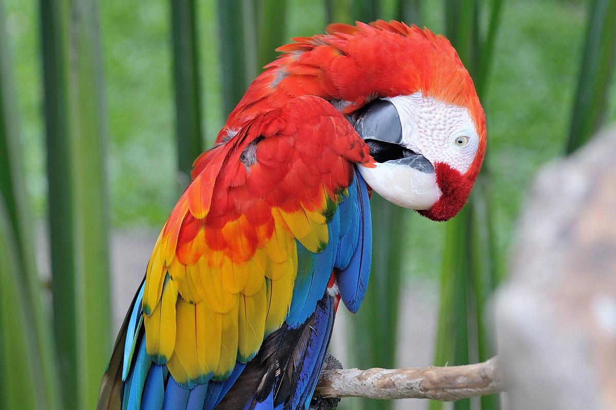 064-bali-birdpark-web