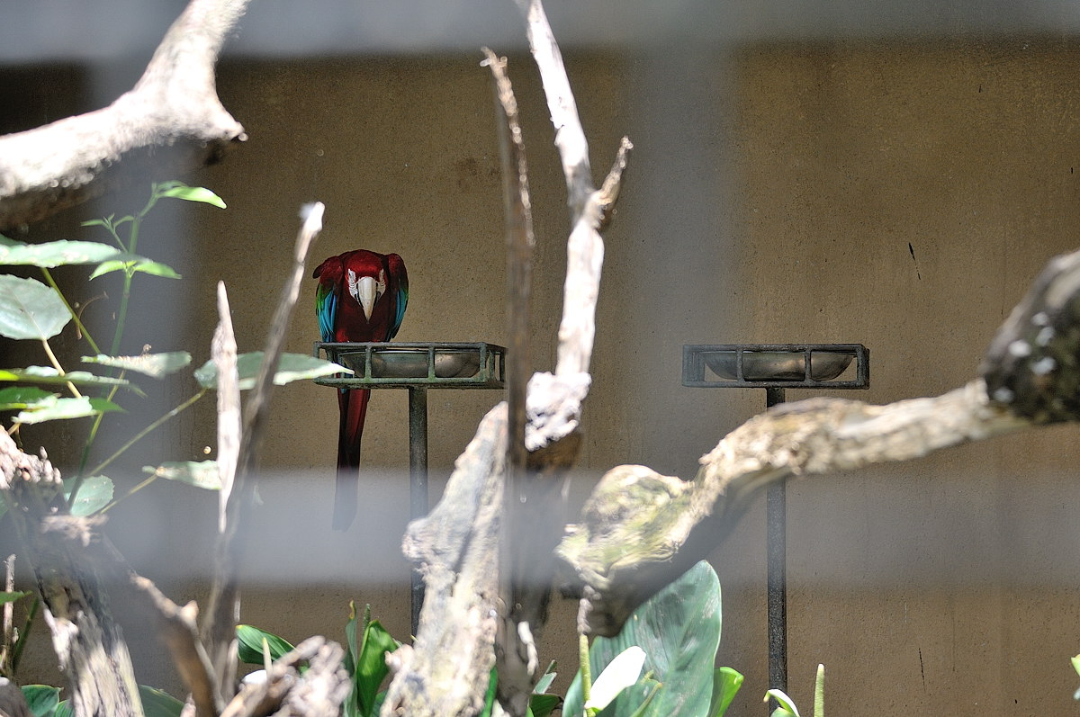 054-bali-birdpark-web