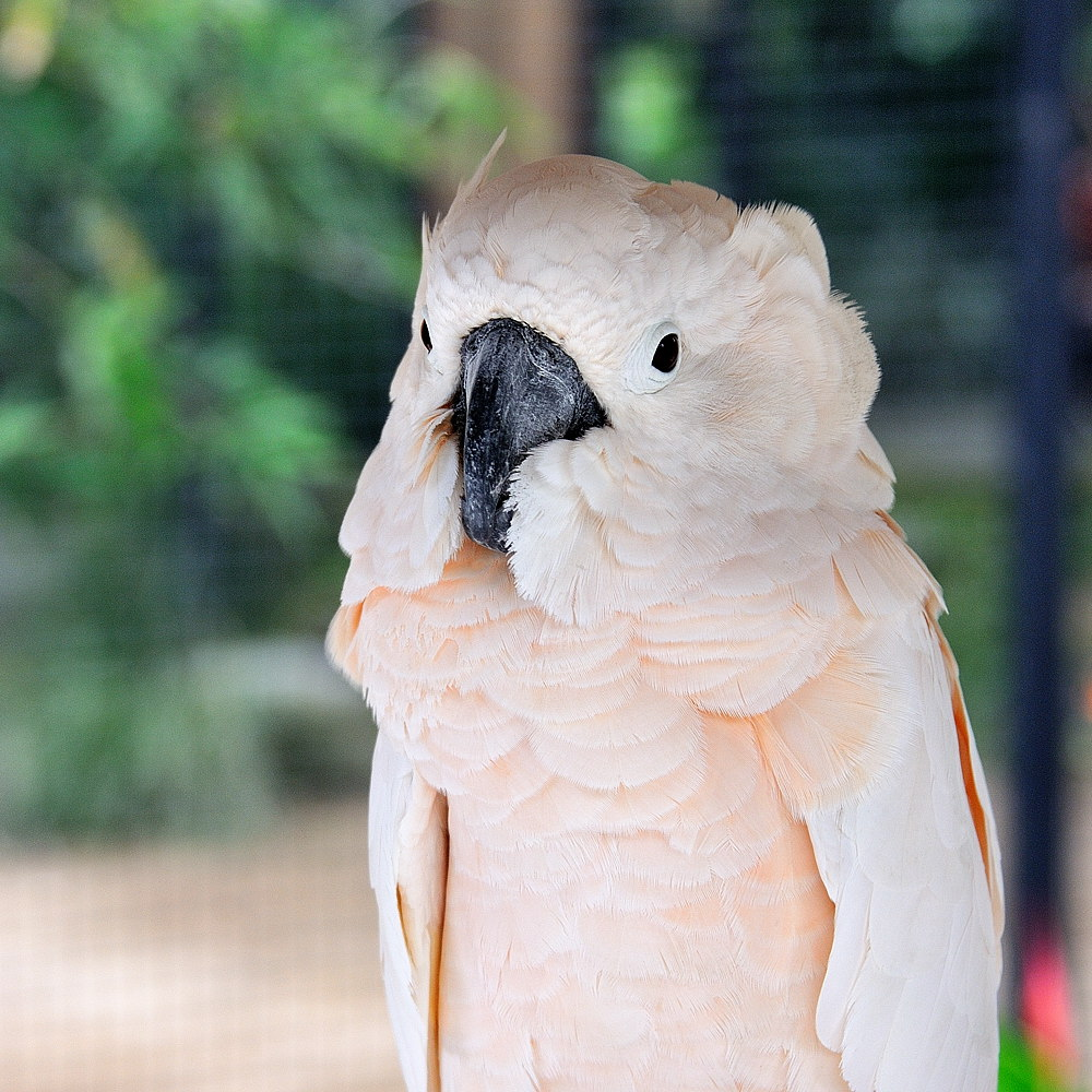 072-bali-birdpark-02-web