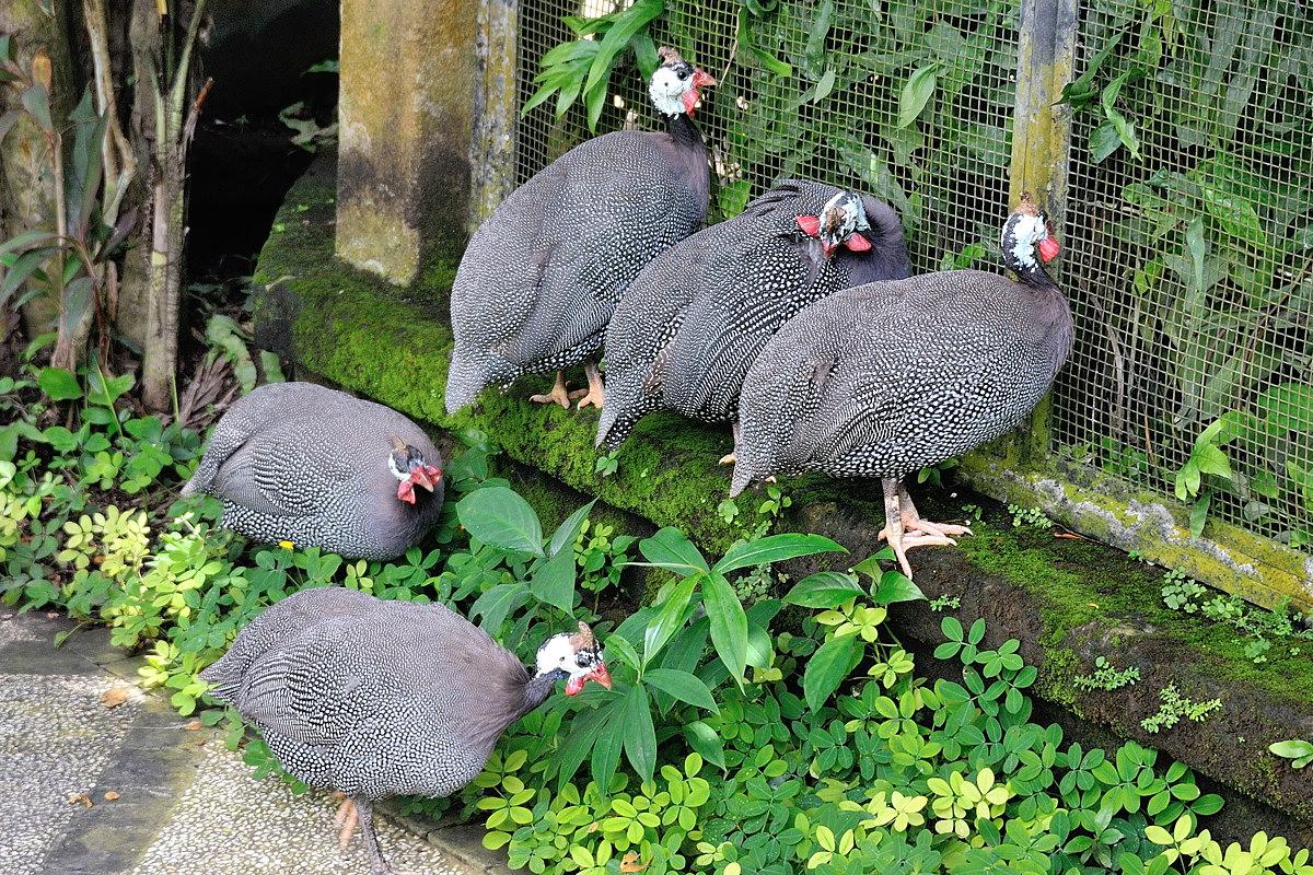 061-bali-birdpark-web