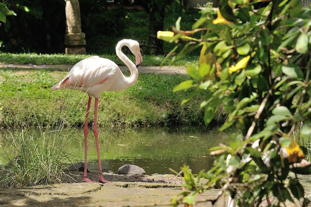 066-bali-birdpark-web