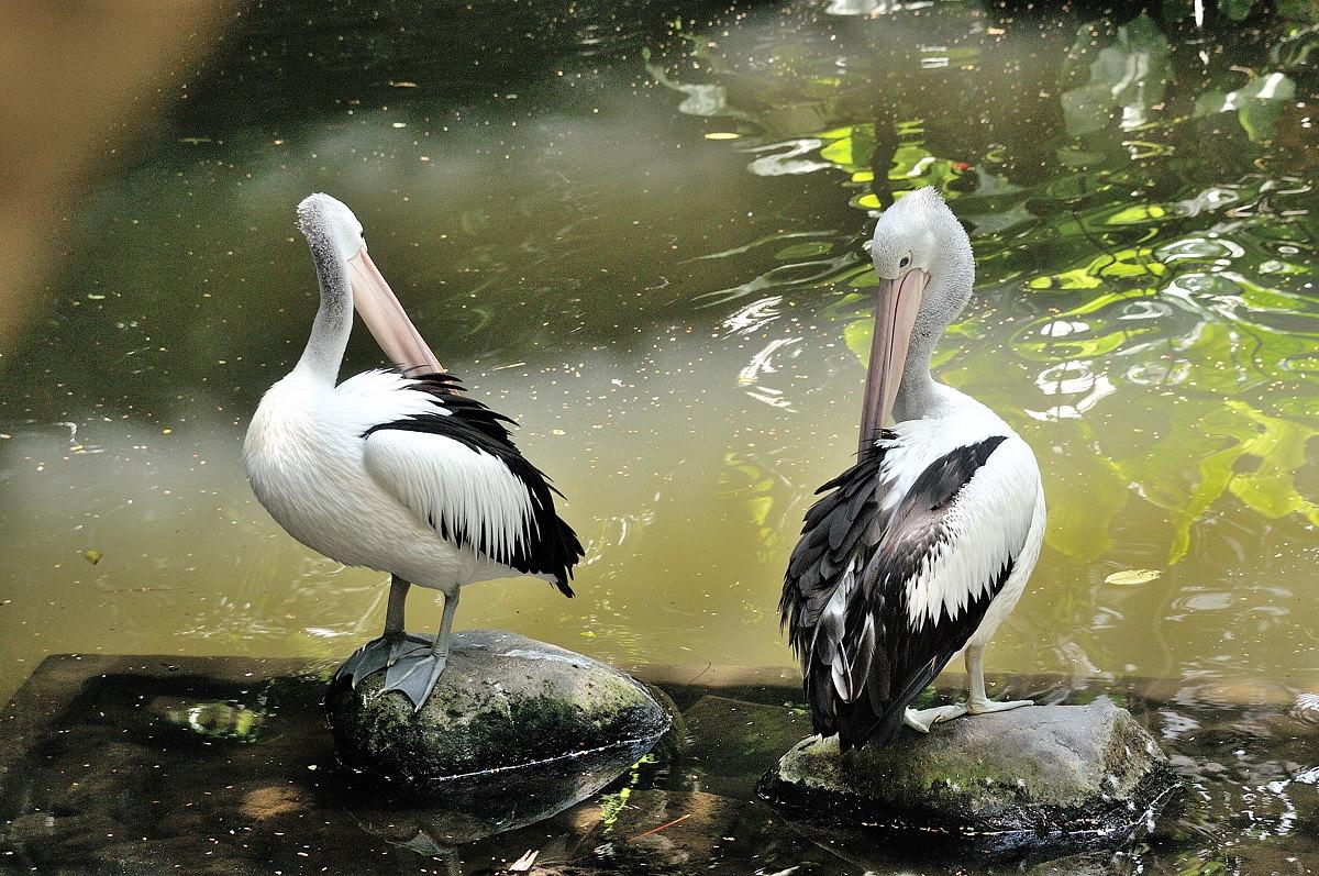 068-bali-birdpark-web